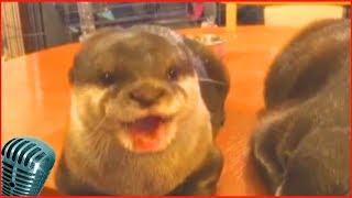 смешные животные и природа 8# наш bbs