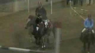 Beret og Saxonia 120cm hest