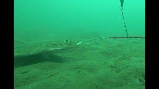 Морская рыбалка в севастополе 2020 осень