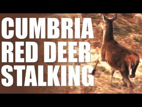 Red deer stalking in Cumbria