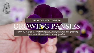 How to Grow Pansy and Viola Flowers from Seeds (UPDATED) - Planting Pansies from Seed