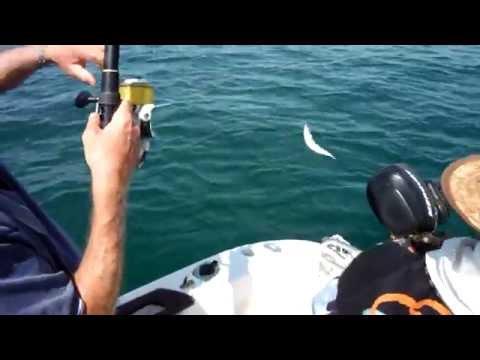 Sottacqua sparando per pescare in un forum