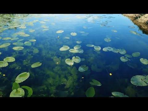 Prirodni fenomen u BiH - Rijeka koja teče uzvodno (VIDEO)