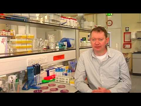 LM068 Food Science and Health - University of Limerick - UL