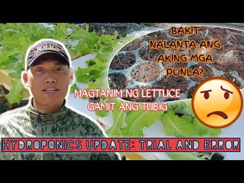 , title : 'HYDROPONICS|| KRATKY METHOD|My mini lettuce garden