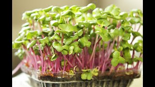 The Microgreens Show | Episode 8 | Nick Greens opens up about Microgreens Business