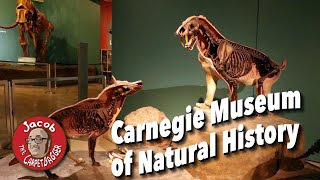 Secrets of the Carnegie Museum of Natural History
