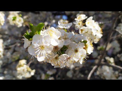 Весна и пчелки. 3 Мая 2020