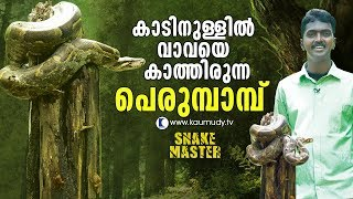OMG!  Amazingly big Python awaits Vava Suresh in the forest | Snakemaster | Latest Episode