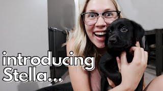 WE GOT A PUPPY!! Bringing Home Our 8 Week Old Black Lab + Puppy Essentials Haul