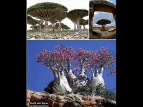 :: عشرٌ من أغرب الأماكن على سطح الأرض !!! ::