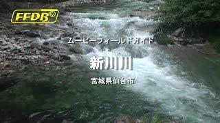 フライフィッシング新川川宮城県の渓流~ヤマメ~