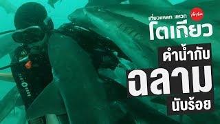 ดำน้ำกับฉลามเป็นร้อย ที่ญี่ปุ่น Tateyama Japan | Go Went Gone ไปไม่เว้น