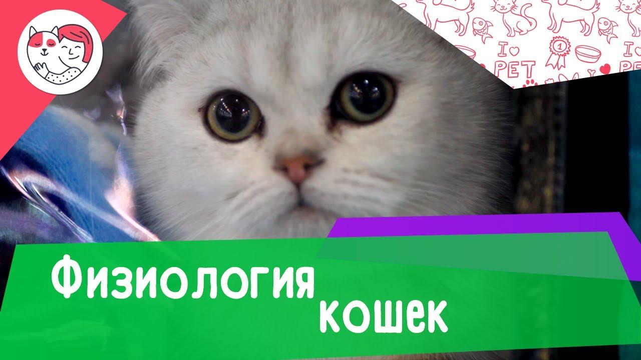 7 интересных фактов о физиологии кошек