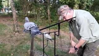 palombe.org Réglage d'un balancier pour pigeon
