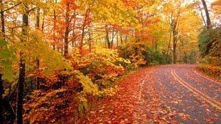Ruas De Outono, Ana Carolina