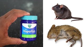 MAGIC VIKS VAPORUB| How To Get Rid of Mouse Rats, Permanently In a Natural Way | Mr. Maker