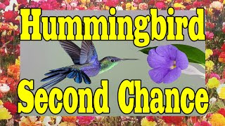 Hummingbird Second Chance MUST SEE FEEL GOOD VIDEO !!!! ORIGINAL by Soundrone