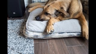 Money-saving tips for pet owners