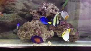 海水魚初心者 チョウチョウウオ クマノミ ヤッコ スズメダイ 熱帯魚 海水魚