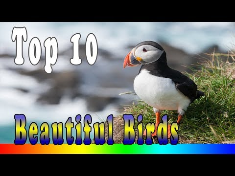 Top 10 Most Beautiful Birds In The World