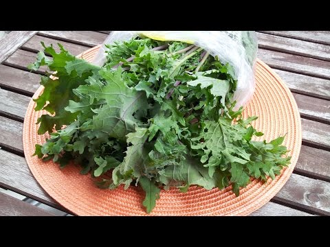 Video Tips for eating raw kale (without gagging)