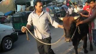 preview picture of video 'Noya Bazar Gorur Haatt...'