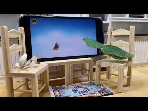 Praying Mantises Watching TV