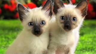 Adorable Kittens ( Music Video With Yeshmin Blechin )