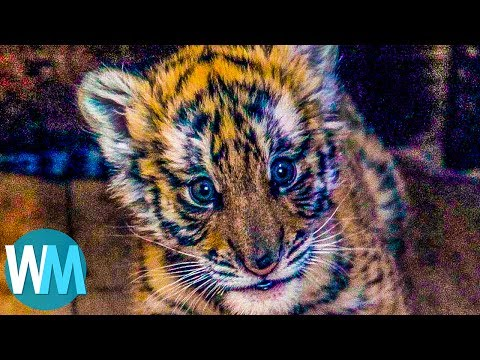 Top 10 Animals You Didn't Know Were Endangered