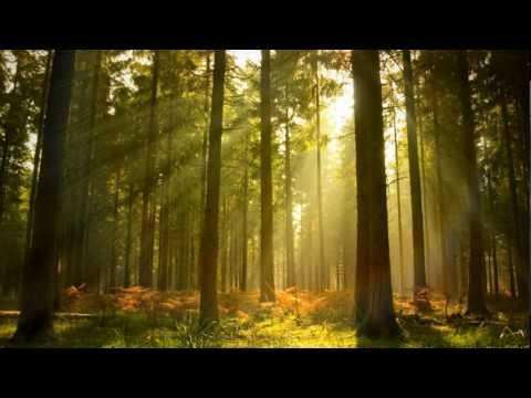 Down slow breath download of mp3 forestry future free your