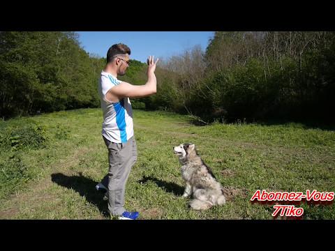 Vidéo humain les helminthes