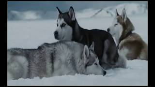"""The more I learn about people the more I love dogs """"Eight"""