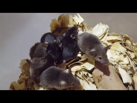 Rodent update: Answering questions, tips, babies, and diy.