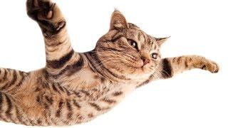 Funny Cats Jumps! Прыжки котов!