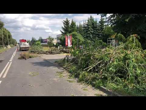 Wideo1: Wycinka drzew zapoczątkowała przebudowę ul. Szybowników w Lesznie