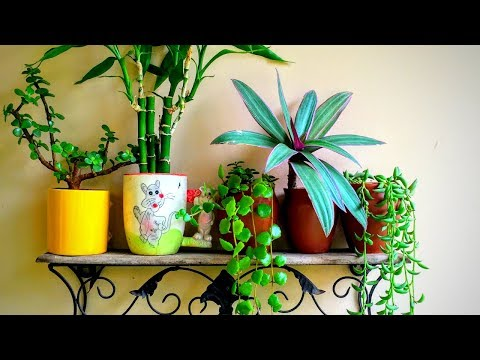 How to grow plant in coffee mugs/Cups || Backyard Gardening