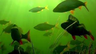 Река проня рязанской области рыбалка