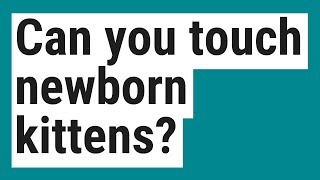 Can you touch newborn kittens?