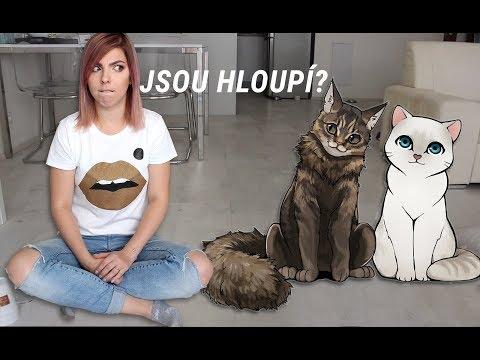 Testuju Kočíčí IQ | Mám doma hloupý kočky?