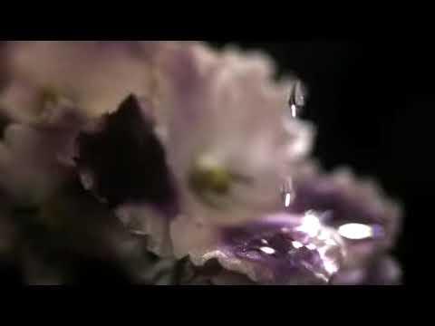花に水滴 高速度ビデオカメラテスト