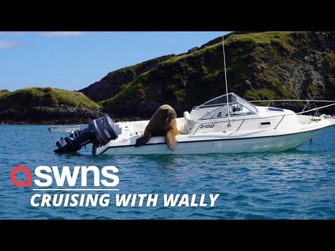 Wally die walrus