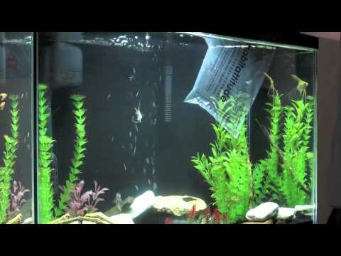New fish | Petsmart haul