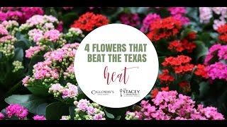 Four Flowers to Beat the Texas Heat