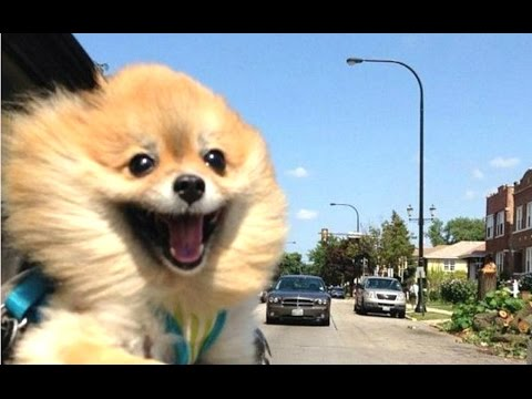 Funny Dogs - A Funny Dog Videos Compilation 2016