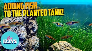 We Need Names for our New Fish in our PLANTED TANK!