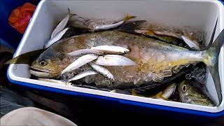 Fishing for queenfish and barracuda at Port Dickson Malaysia