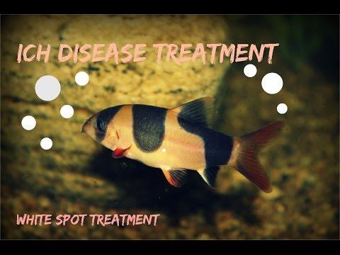 Video Best Ich Treatment!