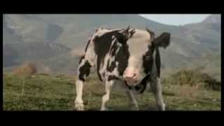 la vache elle est barjo mp3