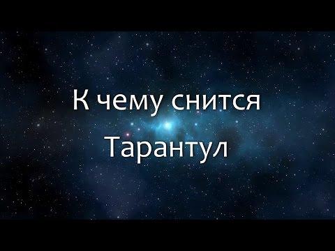 К чему снится Тарантул (Сонник, Толкование снов)